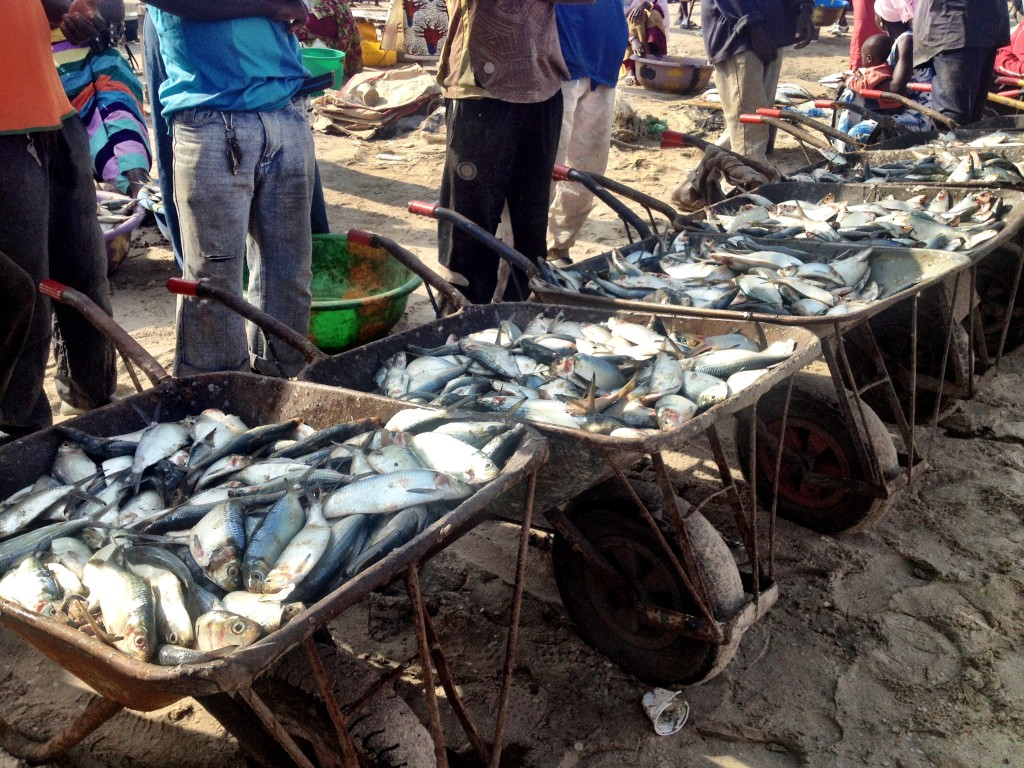 First impressions of the Gambia - Tanji Fish Market Gambia
