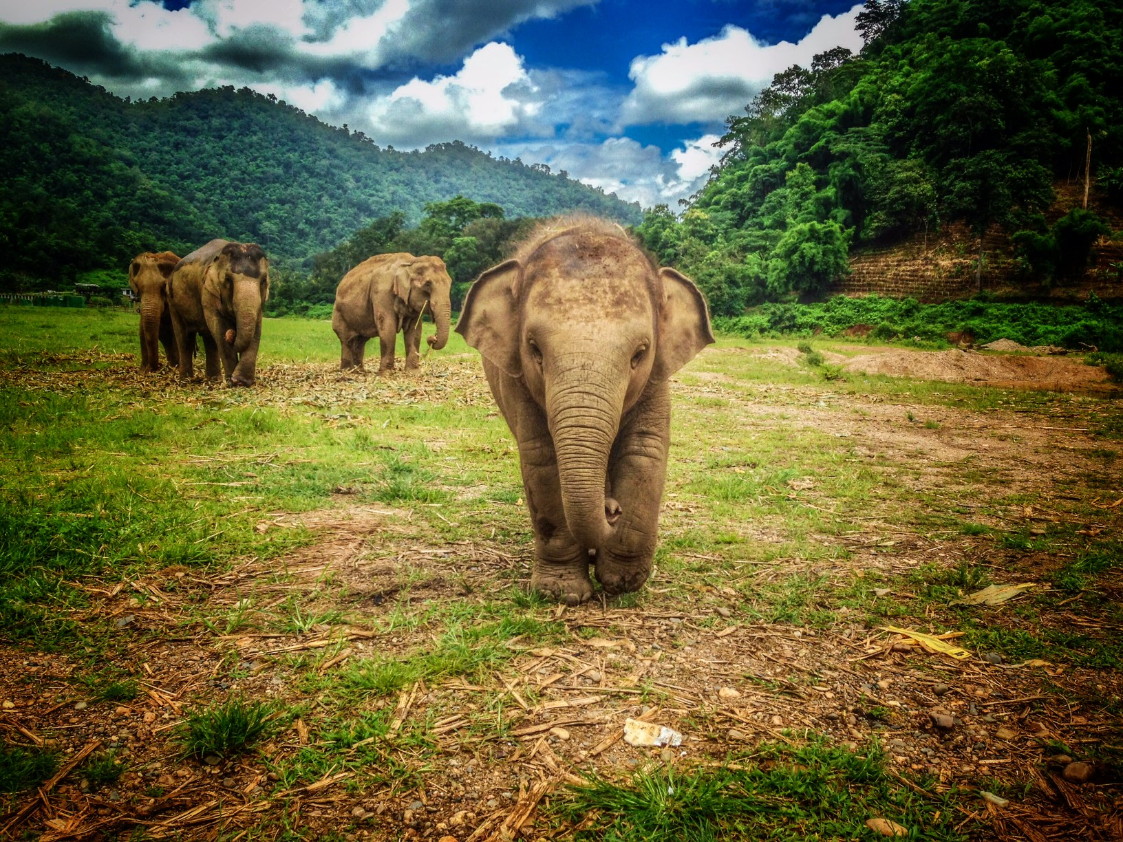 From Where I Work: Diana at Elephant Nature Park Thailand