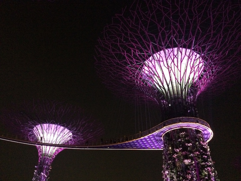 The solar-powered supertrees at Gardens By The Bay light up by night