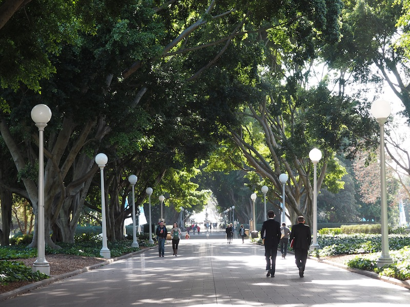 Hyde Park is an easy walk from PARKROYAL Darling Harbour. I cut through here on my way to The Australian Museum