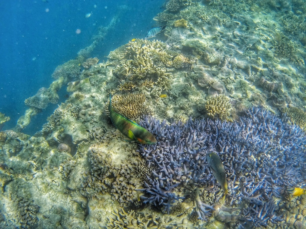 The best experiences at the great barrier reef girl for Great barrier reef fish