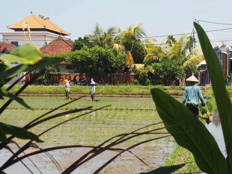 First Impressions Of Canggu, Bali