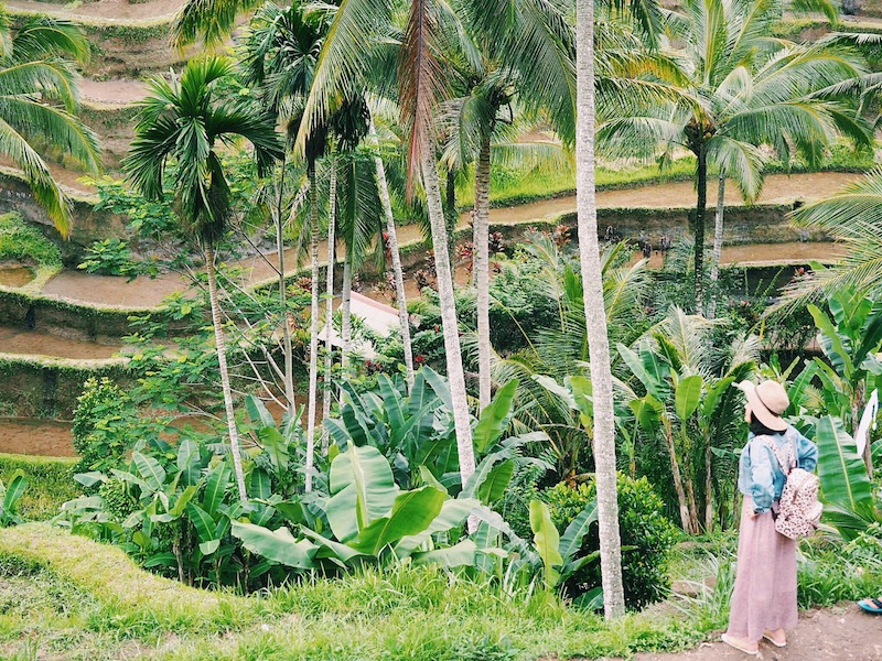 The famous rice terraces of Tegallalang
