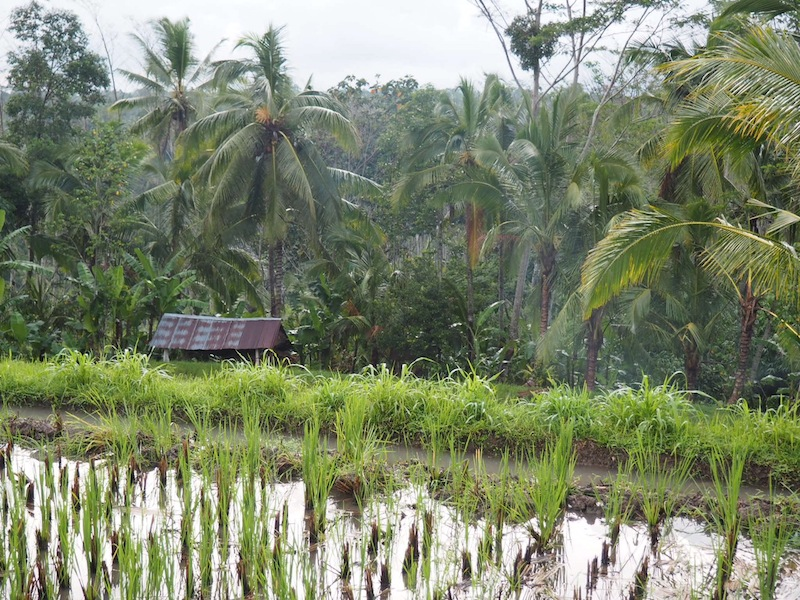 It's a scenic drive to Alila Ubud