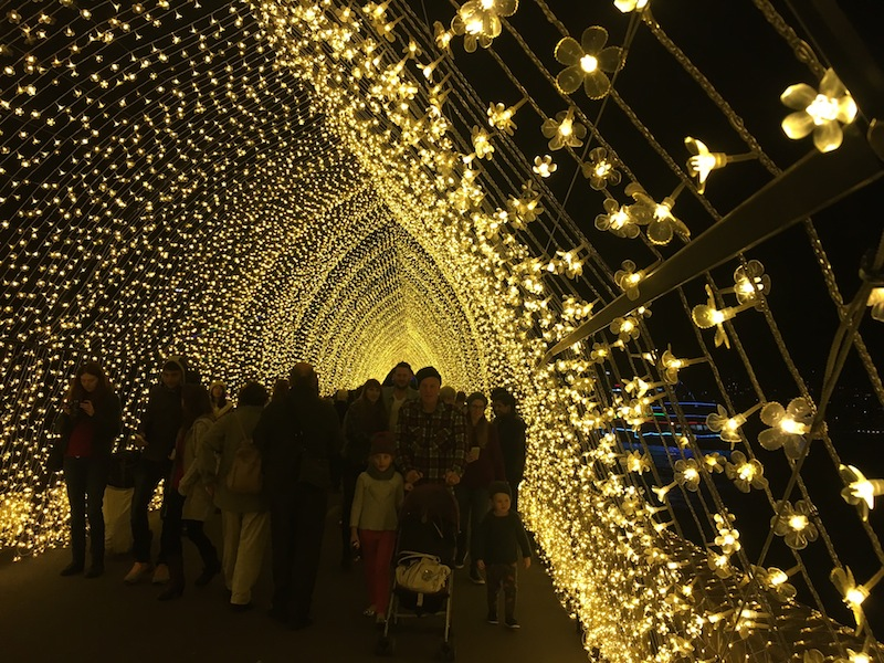 Cathedral Of Lights consists of thousands of twinkling flowers