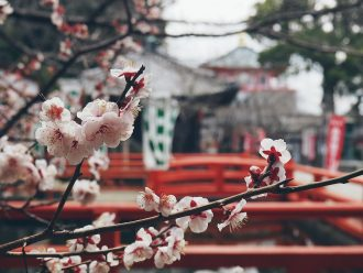 Japan bucket list - places and experiences you must not miss