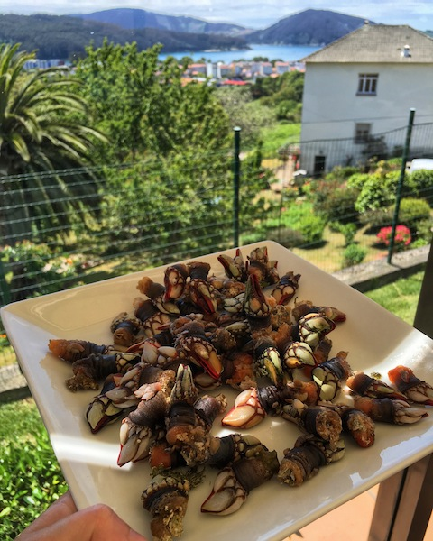 Percebes or Goose Barnacles look a little like something from the Jurassic age