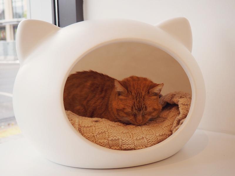 Regal Cat Cafe Kensington Calgary