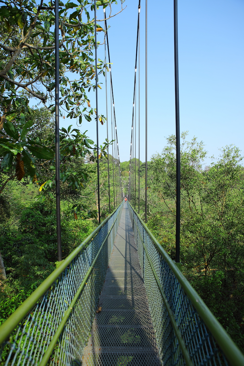 MacRitchie Treetop Walk Singapore