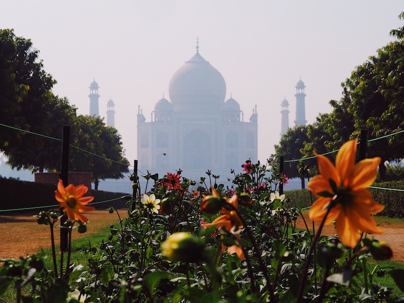Photo of Taj Mahal from Mehtab Bagh
