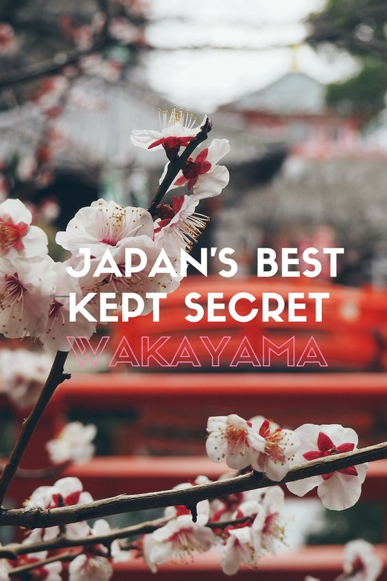 Japan's best kept secret: Wakayama